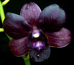 Flori de suflet