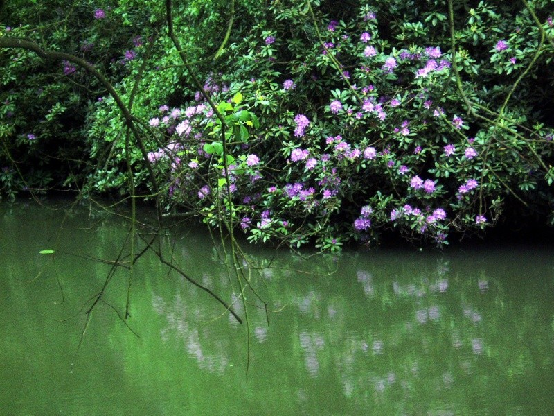 Thème du mois de Mai 'Le renouveau du printemps' P5180014
