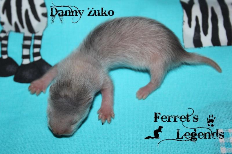 Bree X Lupin : 5 furetons nés le 15 Mai 2012 Danny10