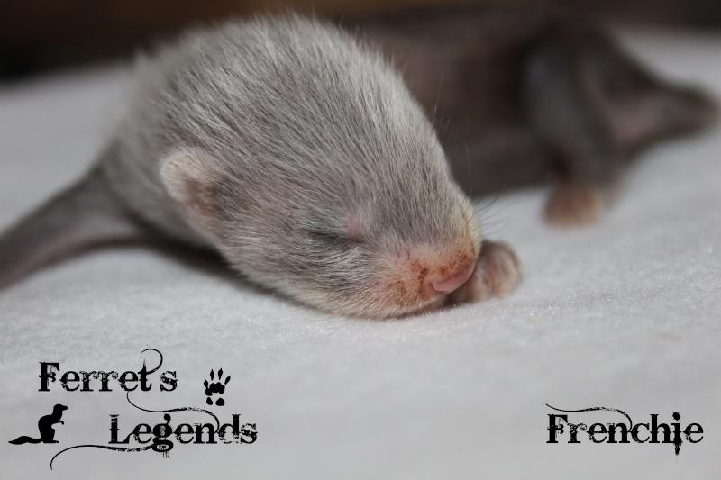 Bree X Lupin : 5 furetons nés le 15 Mai 2012 Fs2_410