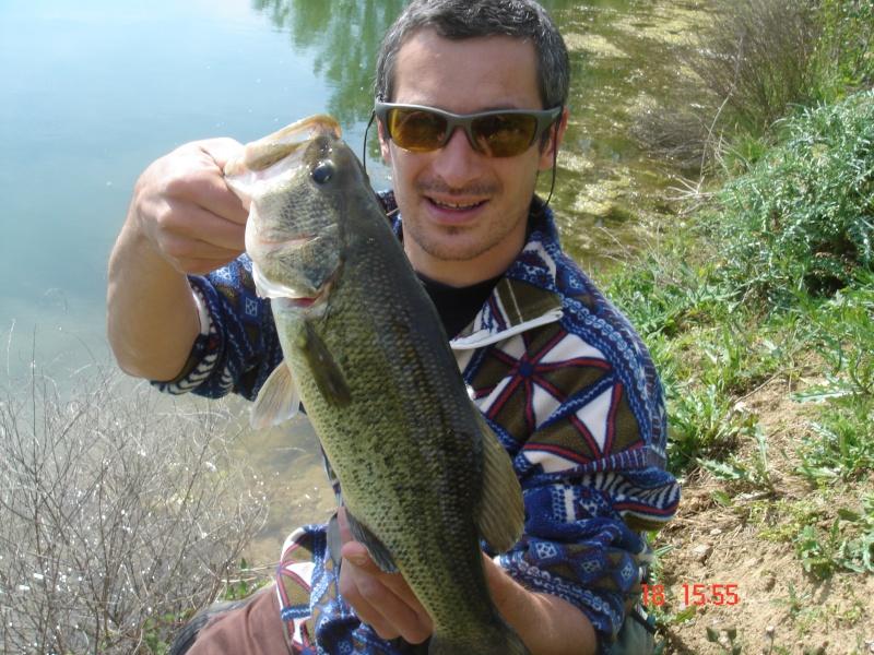 Black bass Dsc01522