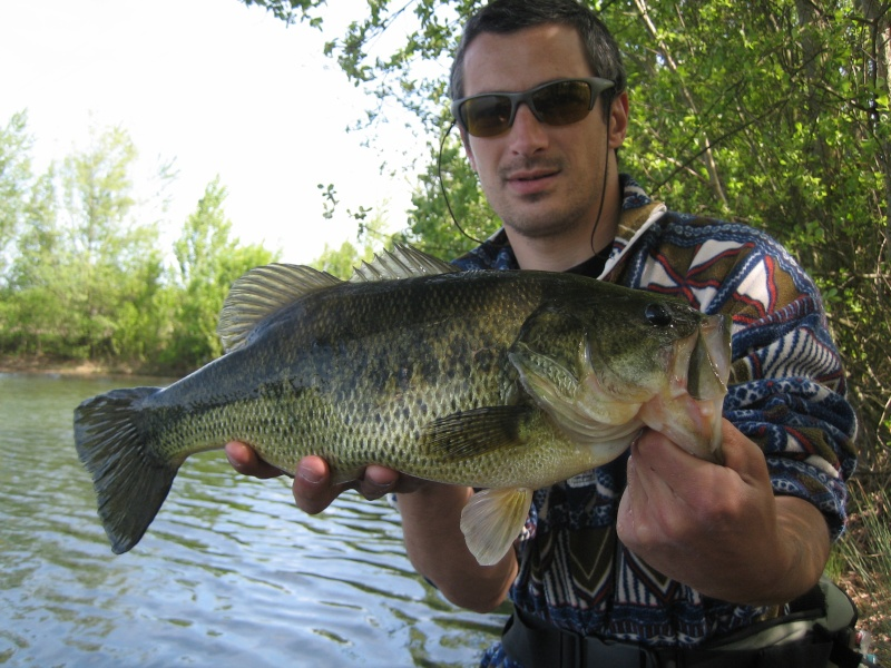 Black bass Titani10