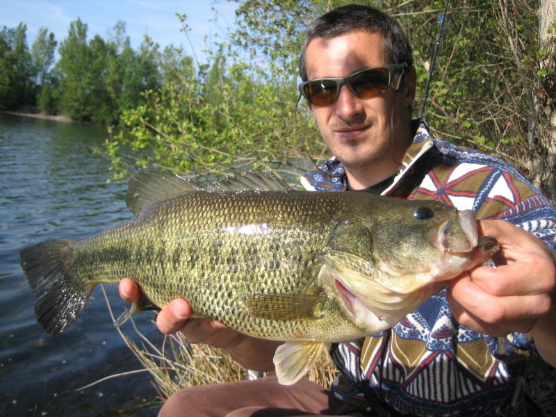 Black bass Titani11
