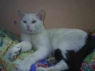 gato perdido en Mogán Pic01410