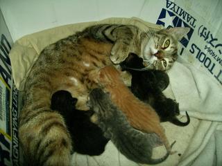 10 gatitos por el barranco de  tinoca Pict0011