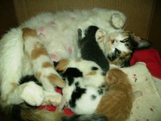 10 gatitos por el barranco de  tinoca Pict0012