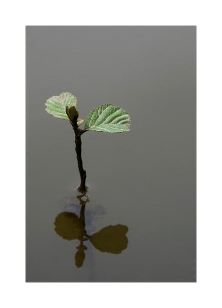 Petit arbre deviendra grand ... G_pc_r10
