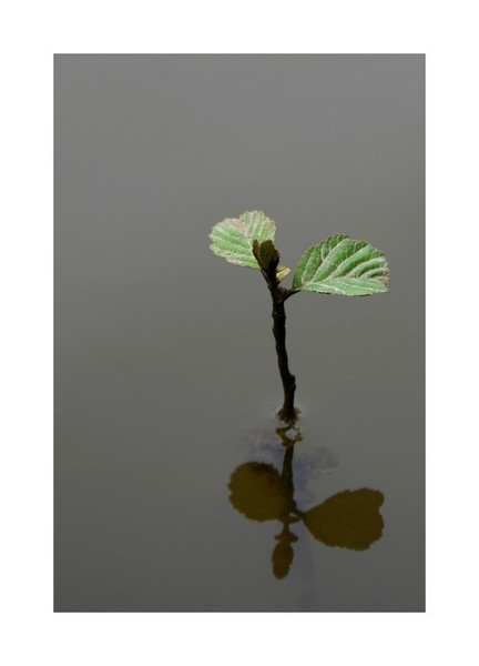 Petit arbre deviendra grand ... Gourge11