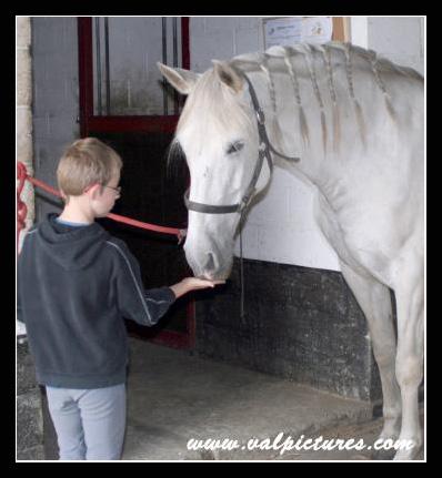 Mes photos de chevaux... 11015110