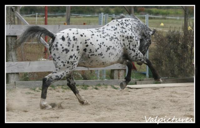Mes photos de chevaux... - Page 3 B1210
