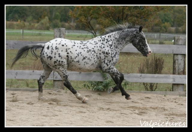 Mes photos de chevaux... - Page 3 B1310