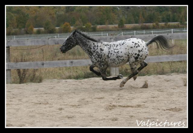 Mes photos de chevaux... - Page 3 B1410