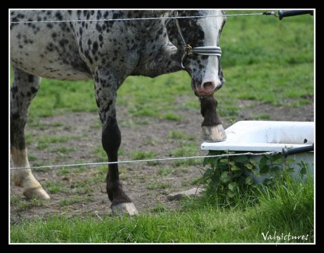 Vos plus belles grimaces de cheval et photos gag .... Blog1020