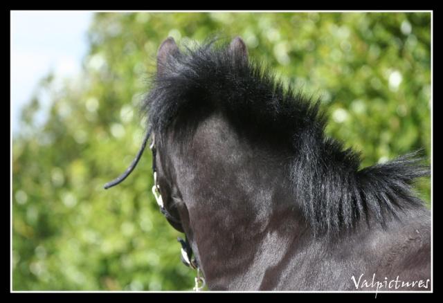 Mes photos de chevaux... - Page 4 Blog1114
