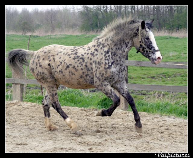 Mes photos de chevaux... Blog136