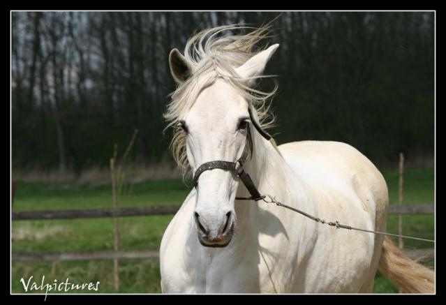 Mes photos de chevaux... Blog137