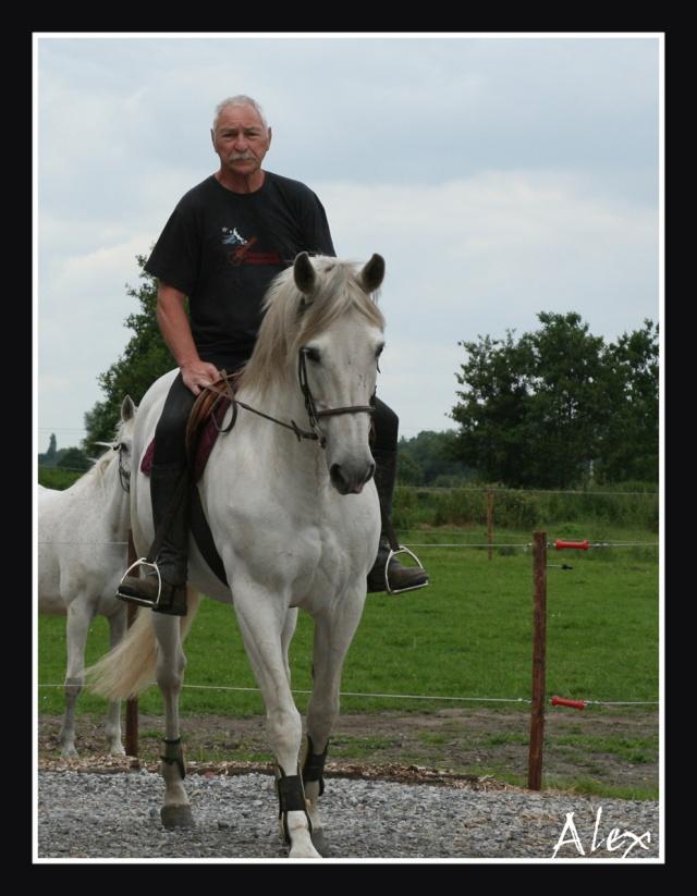 Mes photos de chevaux... Blog140
