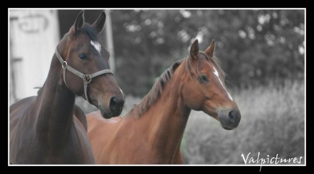 Mes photos de chevaux... Blog228
