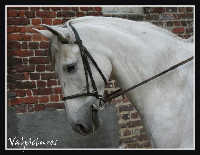 Mes photos de chevaux... Blog231