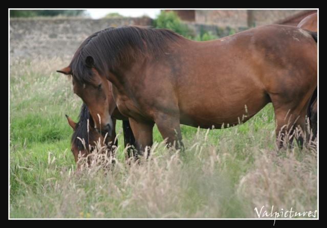 Mes photos de chevaux... - Page 2 Blog237
