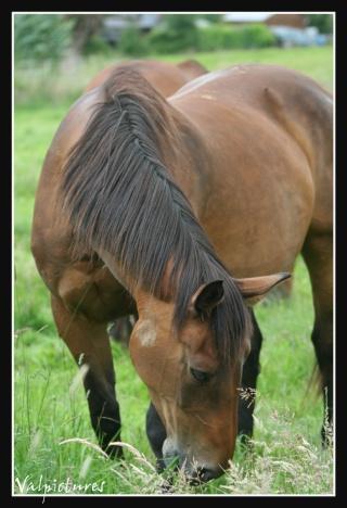 Mes photos de chevaux... - Page 2 Blog427