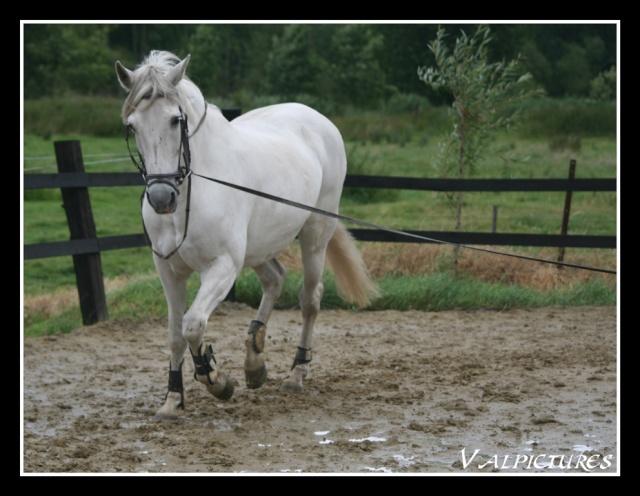 Mes photos de chevaux... - Page 2 Blog433