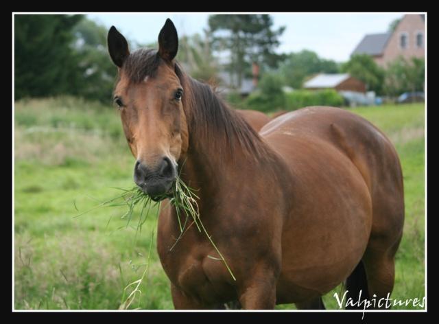 Mes photos de chevaux... - Page 2 Blog528