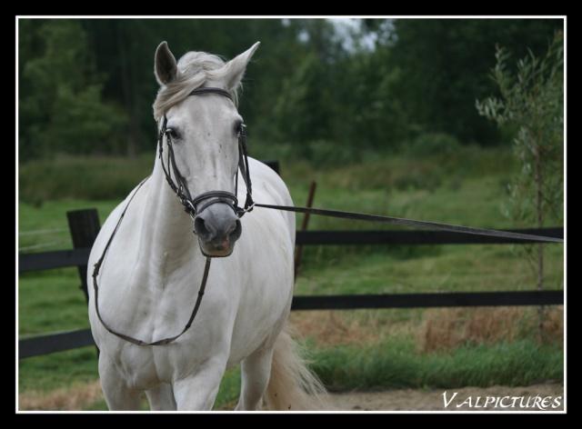 Mes photos de chevaux... - Page 2 Blog537