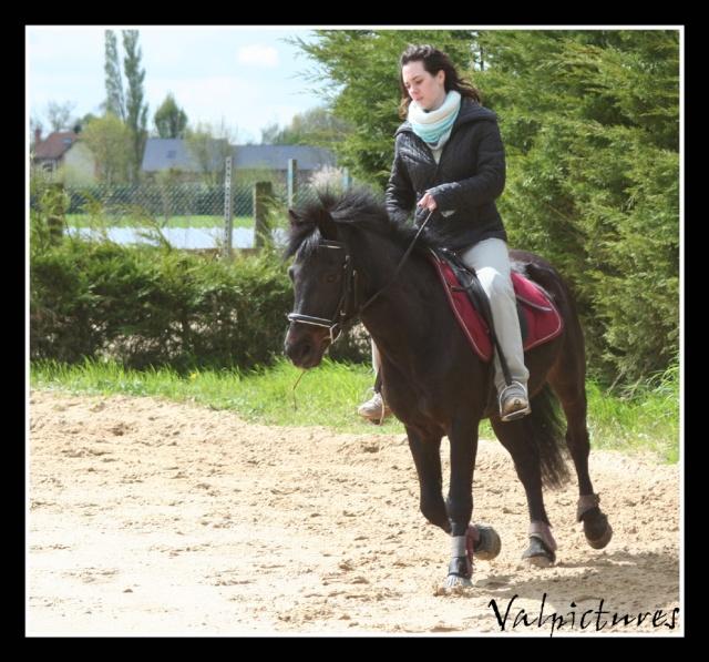 Mes photos de chevaux... - Page 4 Blog626