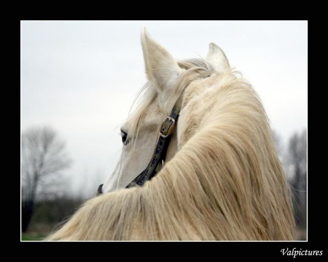 Mes photos de chevaux... Blog628