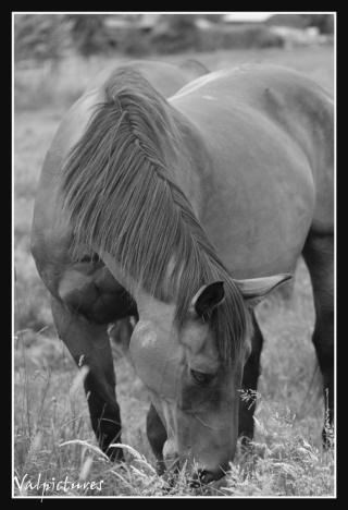 Mes photos de chevaux... - Page 2 Blog633