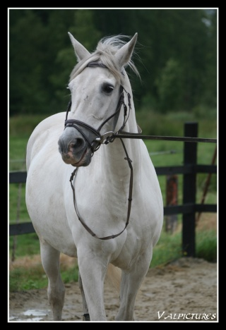 Mes photos de chevaux... - Page 2 Blog641