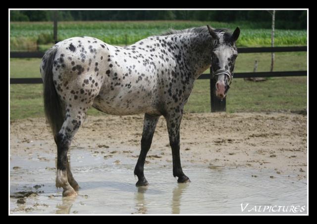 Mes photos de chevaux... - Page 2 Blog724