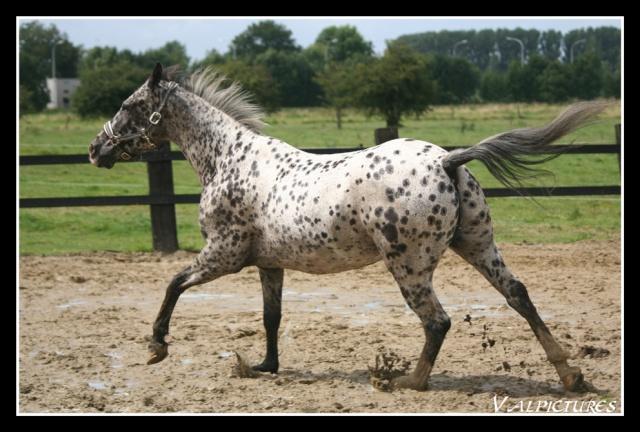 Mes photos de chevaux... - Page 2 Blog831