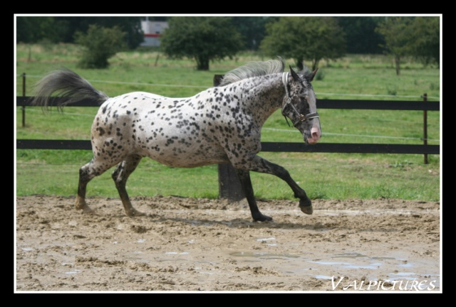 Mes photos de chevaux... - Page 2 Blog925