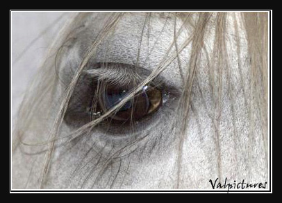Mes photos de chevaux... - Page 2 Concou12