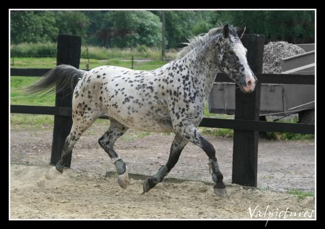 Mes photos de chevaux... - Page 2 Forum128