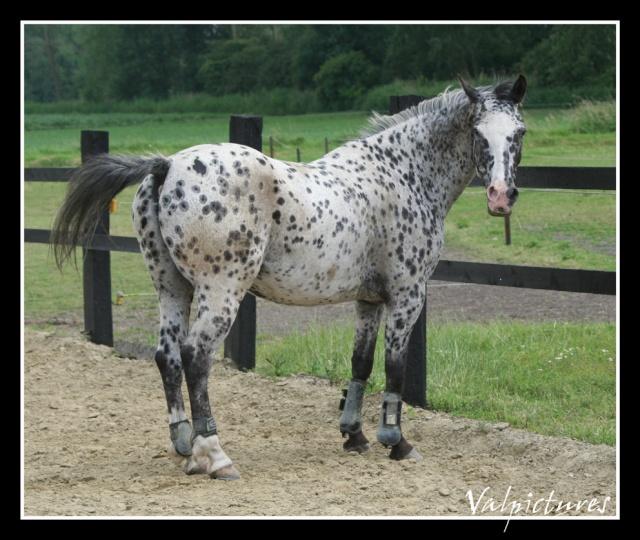 Mes photos de chevaux... - Page 2 Forum314
