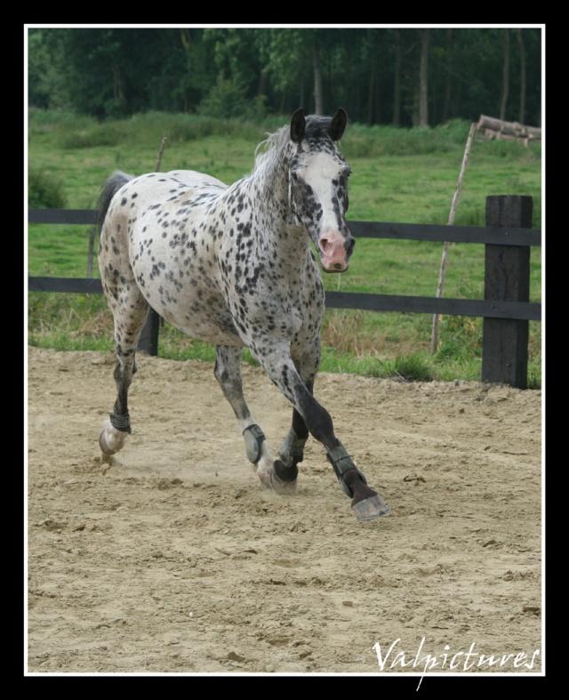 Mes photos de chevaux... - Page 2 Forum417