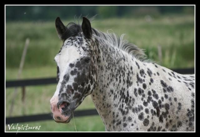 Mes photos de chevaux... - Page 2 Forum611