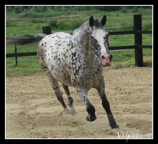 Mes photos de chevaux... - Page 2 Forum711