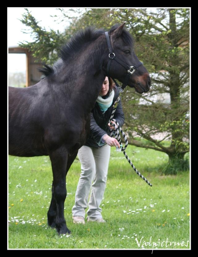 Mes photos de chevaux... - Page 4 Lau710