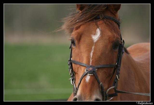 Mes photos de chevaux... Q213