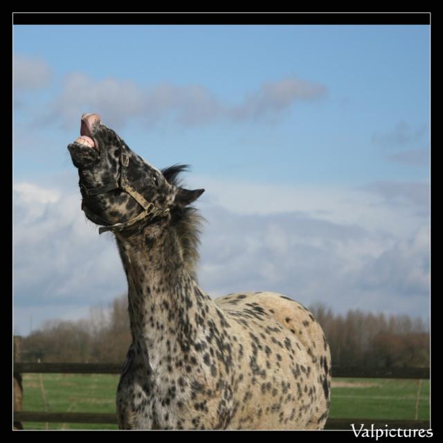Vos plus belles grimaces de cheval et photos gag .... Sourir10