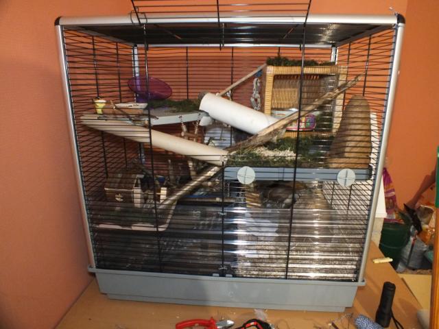 [VENDS - Belgique] Cage Jenny KD Cage10