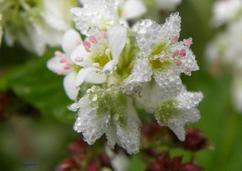 fleurs en perle de rocaille 47258210