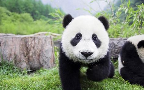 spyky Panda12