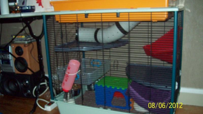 Photos de vos cages - Page 21 100_3213