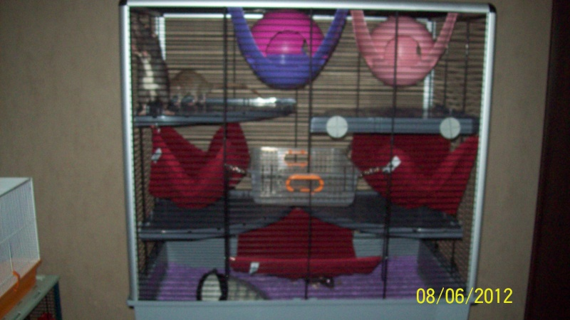 Photos de vos cages - Page 21 100_3214