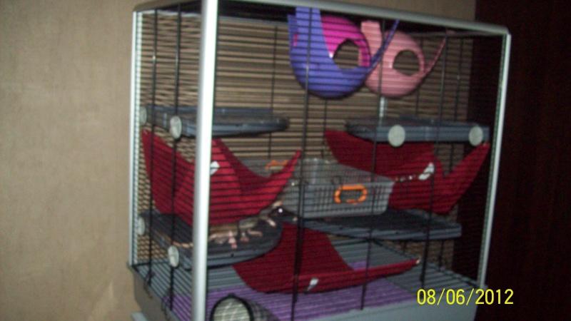 Photos de vos cages - Page 21 100_3215